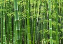 bamboo guadua zuarq arquitectos